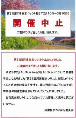 【河津桜祭り中止 2021】